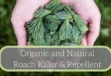 Organic-Natural-Roach-Killer-Repellent