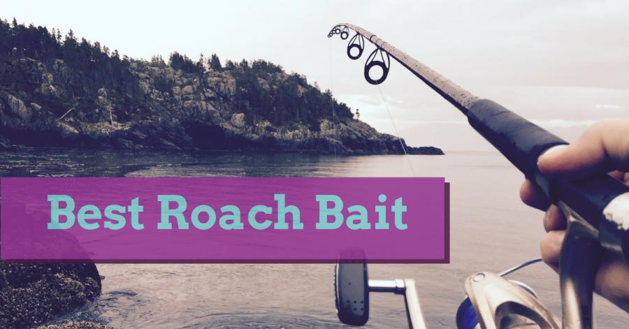 Best Roach Bait