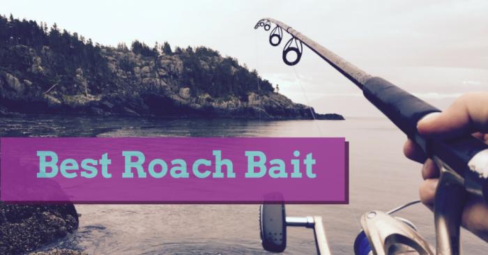4 Best Roach Bait Gel Killer in 2019