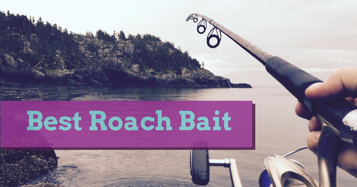 4 Best Roach Bait Gel Killer in 2018 - Pest Survival Guide