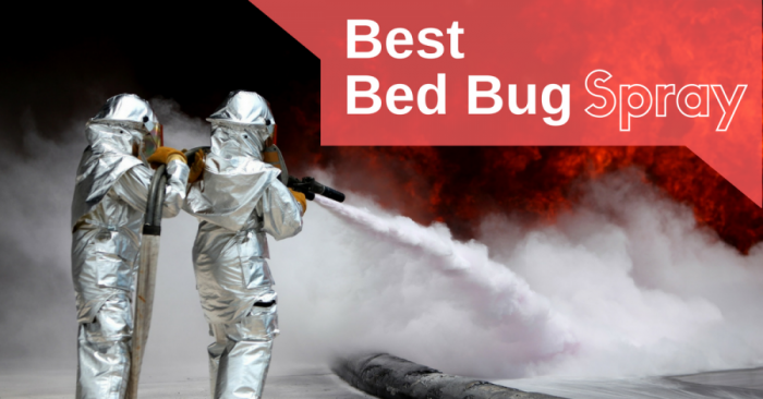 Best Bed Bug Spray in 2019