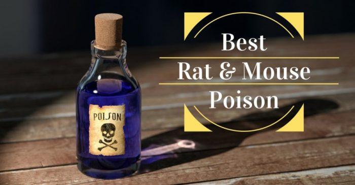 6 Best Rat & Mouse Poison