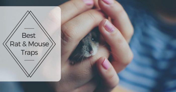 Best Rat & Mouse Trap 2019