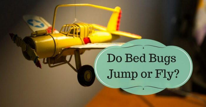 Do Bed Bugs Jump or Fly?