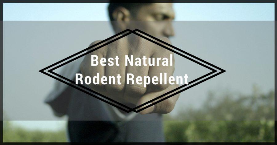 7 Best Natural Rat & Mouse Repellent