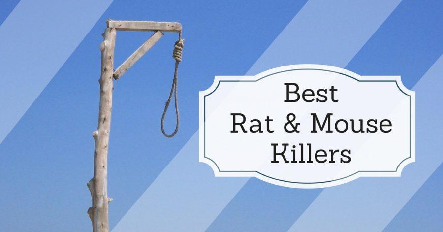 5 Best Rat & Mouse Killers