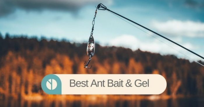 6 Best Ant Bait & Gel