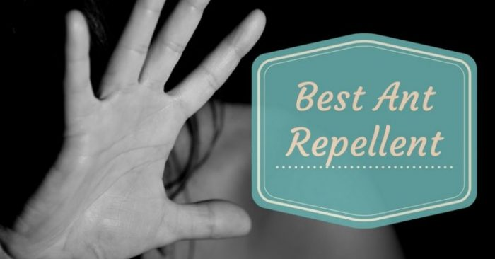 Best Ant Repellent 2019