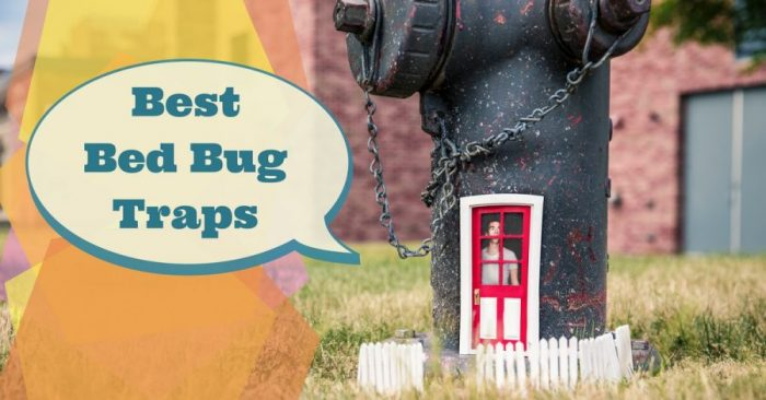 Best Bed Bug Traps 2019