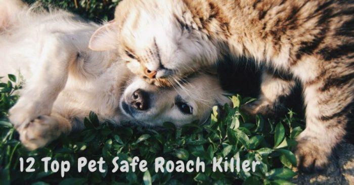 12 Top Pet Safe Roach Killer & Repellent 2019