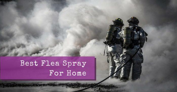 Best Flea Spray For Home