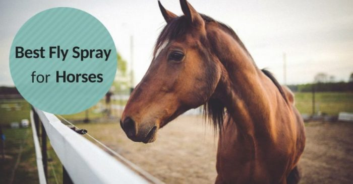 Best Fly Spray for Horses (Buying Guide 2018)