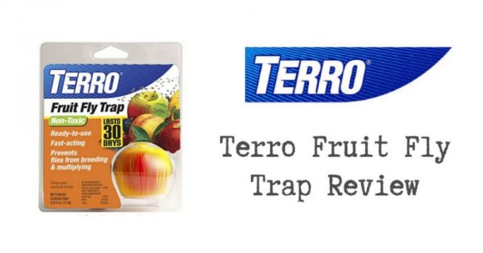 Terro Fruit Fly Trap Review