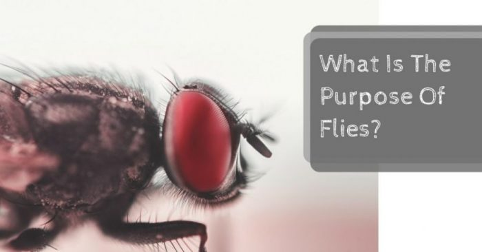 What Is The Purpose Of Flies?