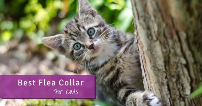 Best Flea Collar For Cats (Updated 2019) - Pest Survival Guide