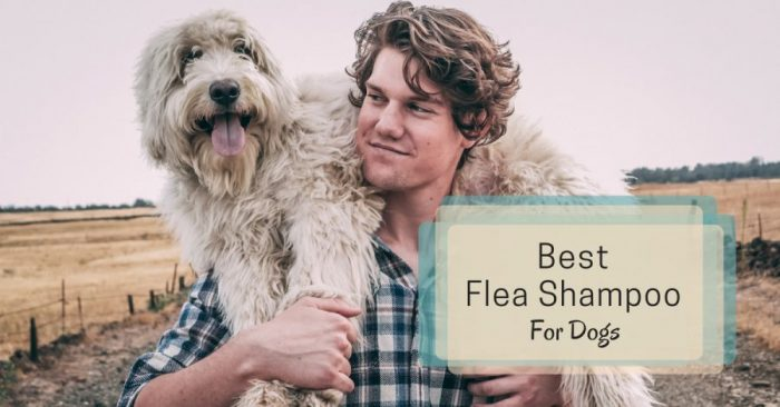 8 Best Flea Shampoo For Dogs