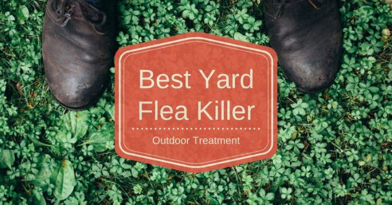 Best Flea Killer Treatment For Yard And Outdoor Pest