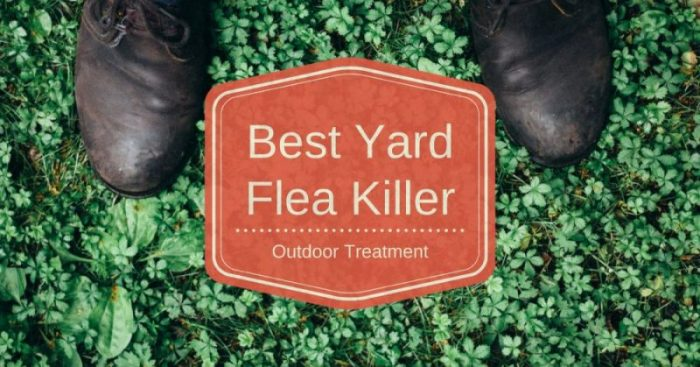 Best Flea Killer Treatment (For Yard and Outdoor)