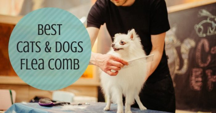 7 Best Flea Comb (for Cats & Dogs)