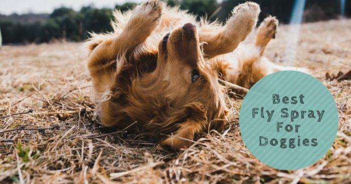 4 Best Fly Sprays For Doggies