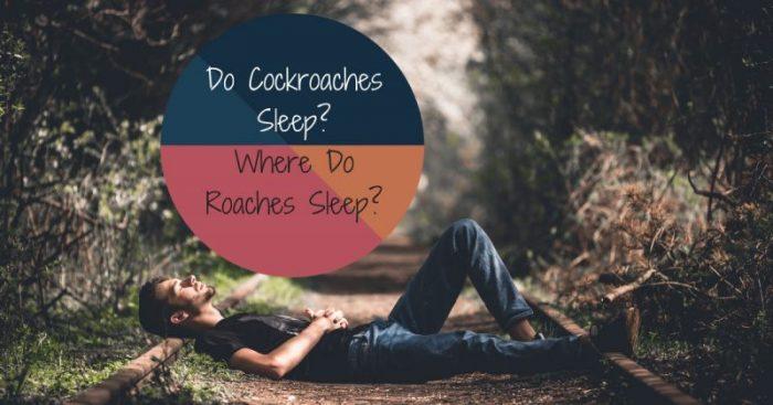 Do Cockroaches Sleep? Where Do Roaches Sleep?