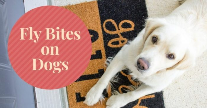 Fly Bites on Dogs