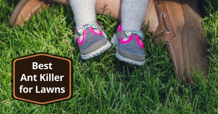 5 Best Ant Killer For Lawns Updated 2020 Pest Survival Guide