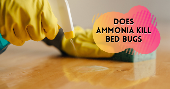 Does Ammonia Kill Bed Bugs Pest Survival Guide